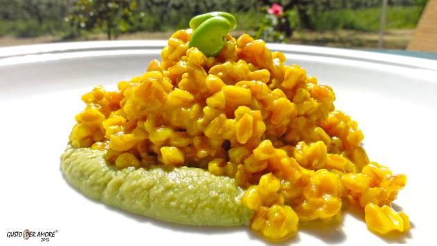 Farro with saffron on a broad bean cream- Recipes with olive oil-