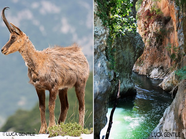 chamoise in Abruzzo